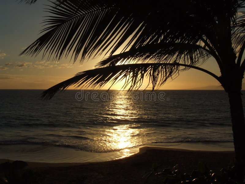 Coucher du soleil de palmier d'Hawaï images stock