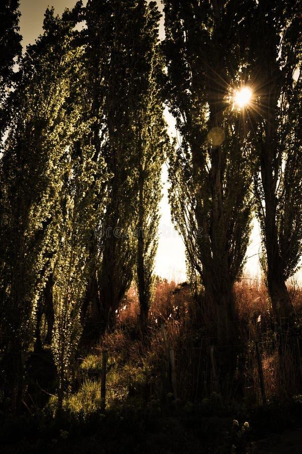 Coucher du soleil de Patagonic photos stock