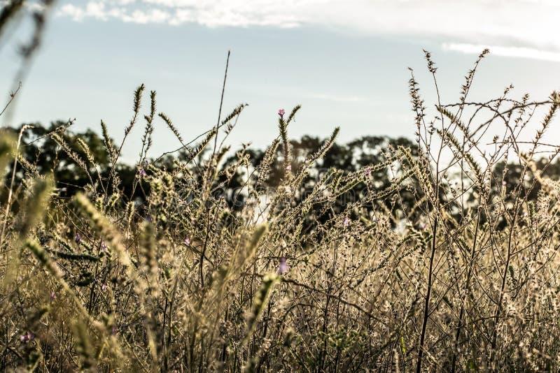 Coucher du soleil de paysage de champ avec la lumière du soleil images stock