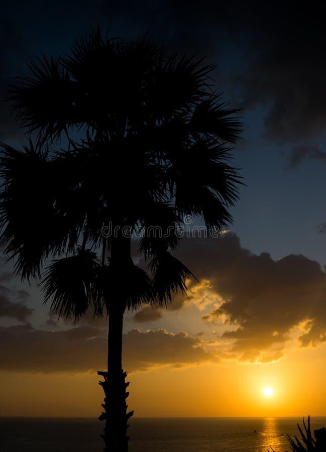 Coucher du soleil de Phuket avec la paume image stock