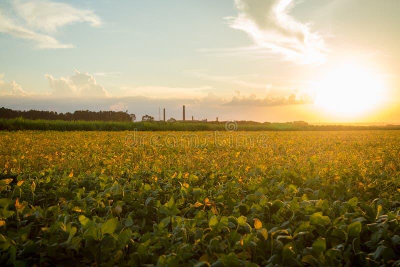 Coucher du soleil de plantation de soja photos stock