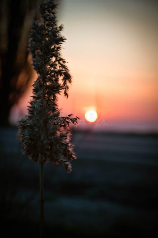Coucher du soleil de ressort dans le domaine photographie stock libre de droits