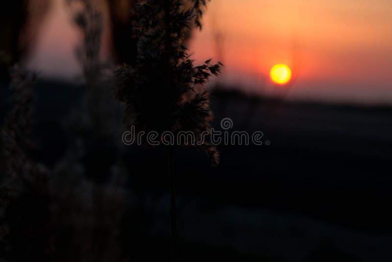 Coucher du soleil de ressort dans le domaine images stock