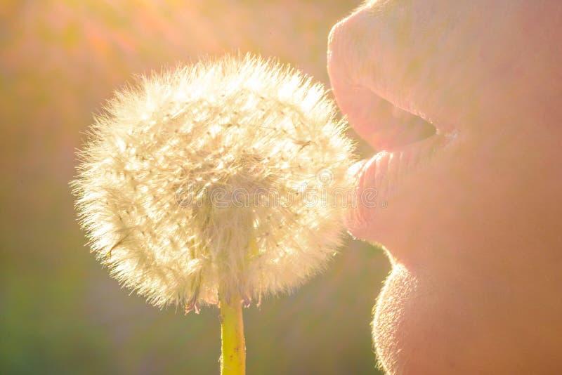 Coucher du soleil de ressort, fille romantique avec une fleur, nature et beauté, produits naturels Les lèvres sexy femelles souff image libre de droits