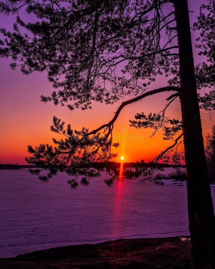 Coucher du soleil de ressort images libres de droits