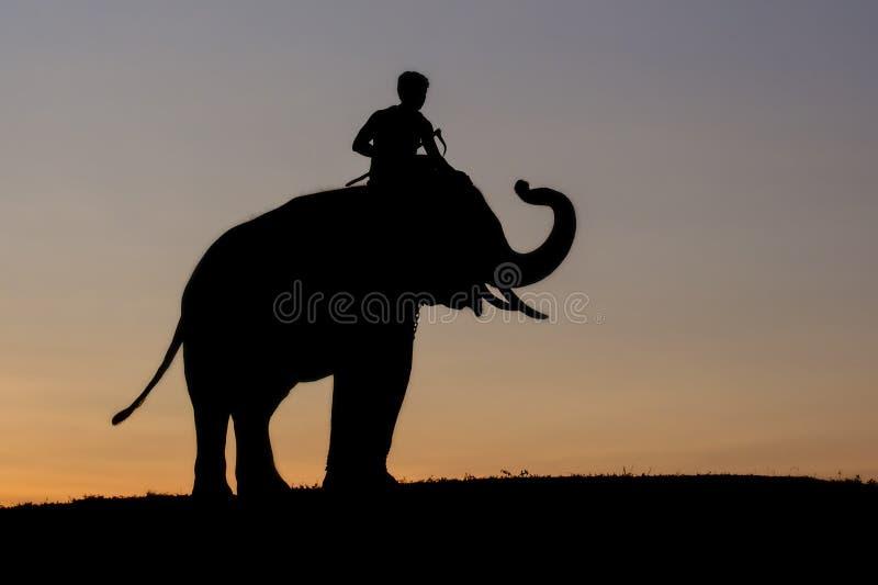 Coucher du soleil de silhouette d'éléphant images stock