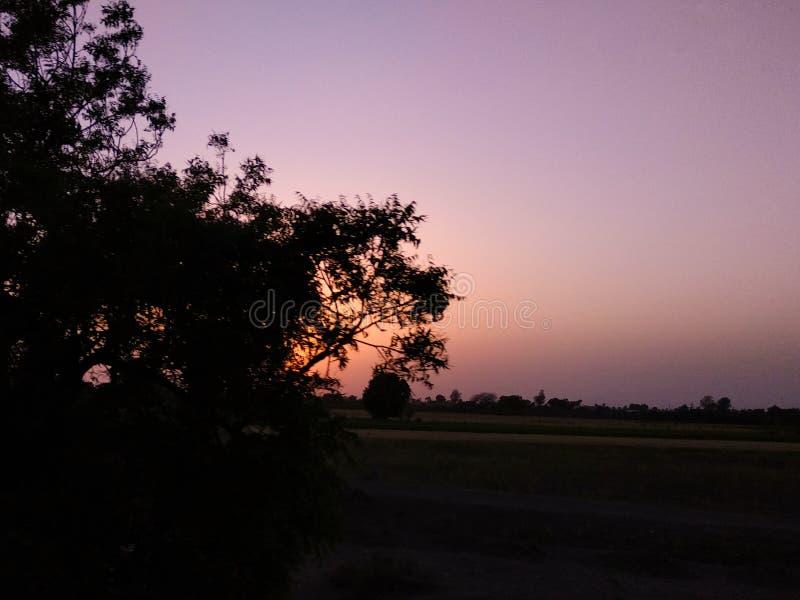 Coucher du soleil de silhouette d'arbre photo stock
