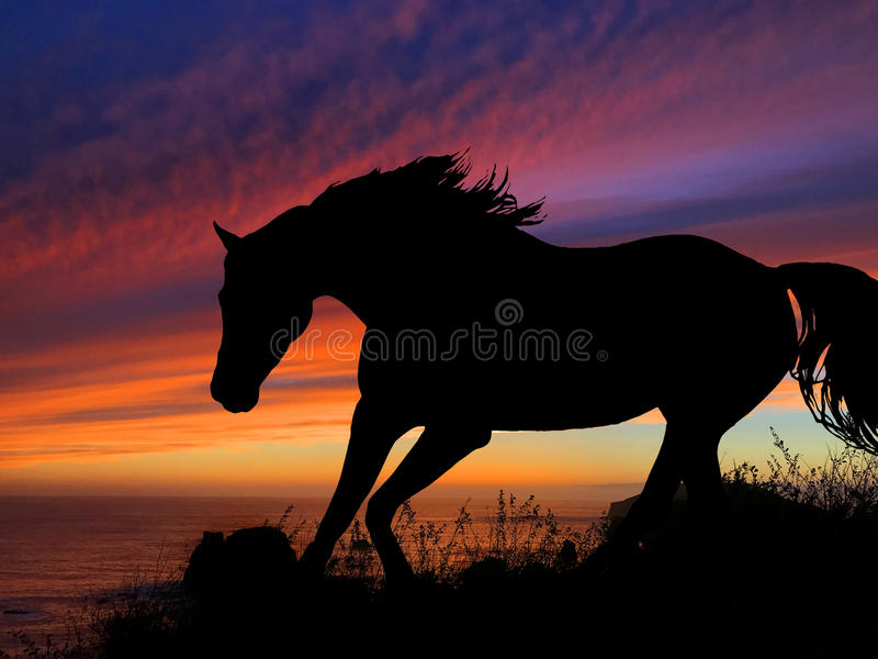 Coucher du soleil de silhouette de cheval photos stock