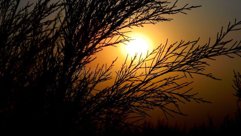 Coucher du soleil de soirée photographie stock