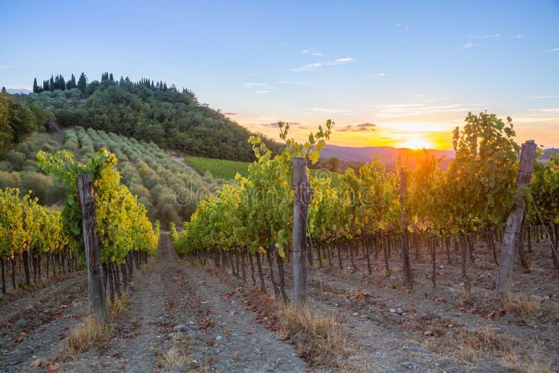Coucher du soleil de vignobles de la Toscane image libre de droits