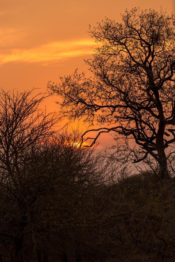 Coucher du soleil dedans derrière des arbres, Afrique du Sud photographie stock libre de droits