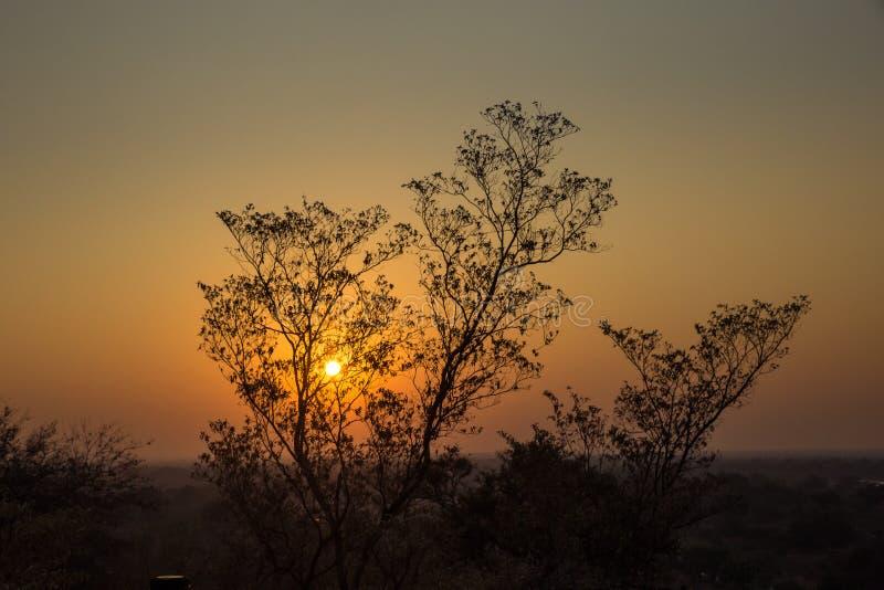 Coucher du soleil dedans derrière l'arbre, Afrique du Sud photo libre de droits