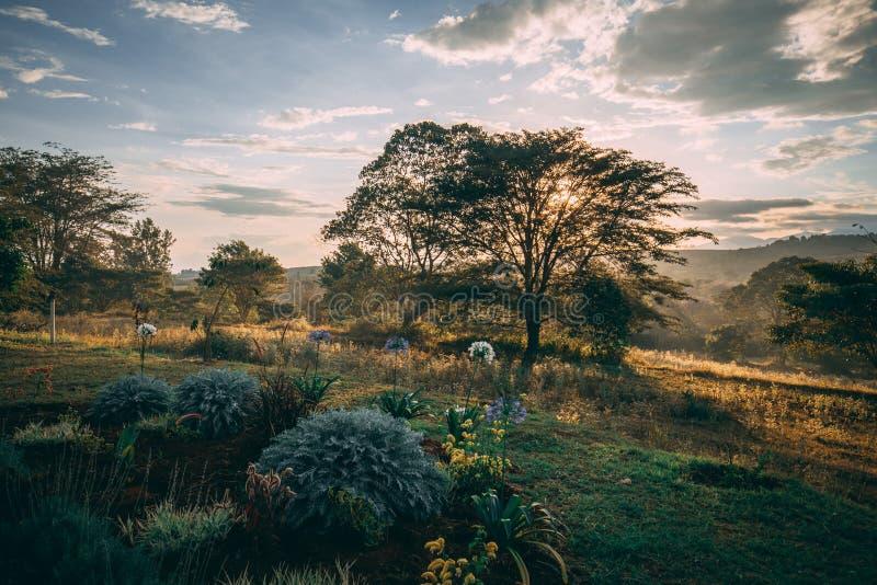 Coucher du soleil derrière des buissons en Afrique image libre de droits