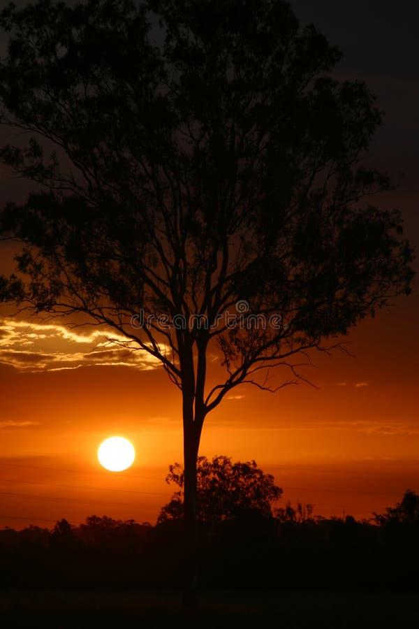 Coucher du soleil derrière l'arbre image stock