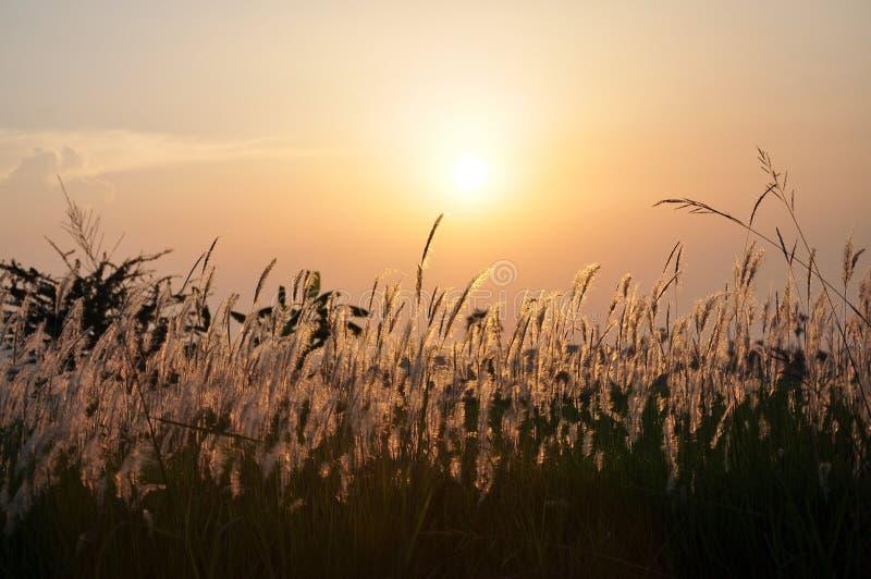 Coucher du soleil derrière l'herbe photos libres de droits
