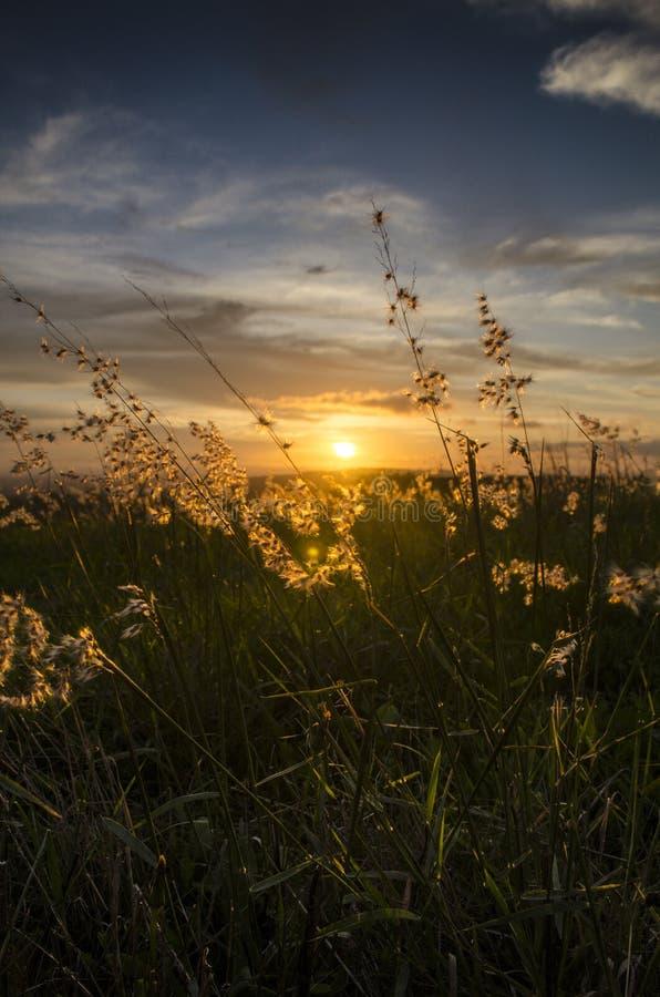 Coucher du soleil derrière le portrait d'herbe photos stock