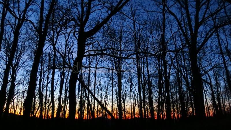 Coucher du soleil derrière les arbres photographie stock libre de droits