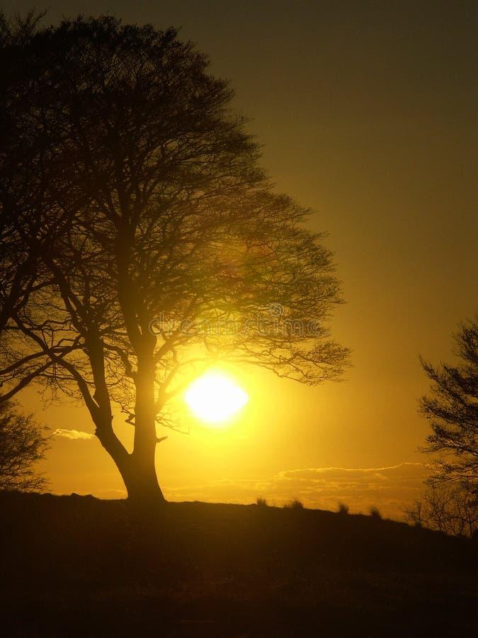 Coucher du soleil derrière un arbre photo stock