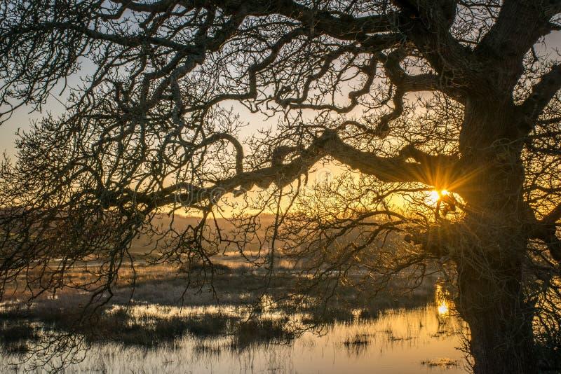 Coucher du soleil derrière un arbre sur le marais de Crowhurst, le Sussex est photos libres de droits
