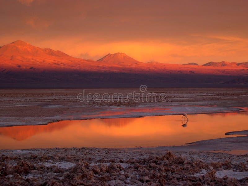 Coucher du soleil du `s d'Atacama - flamant seul images stock