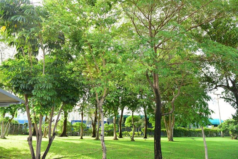 Coucher du soleil en arbre de vert de Forest Landscape With Natural Forest Beautiful Scenic photos libres de droits