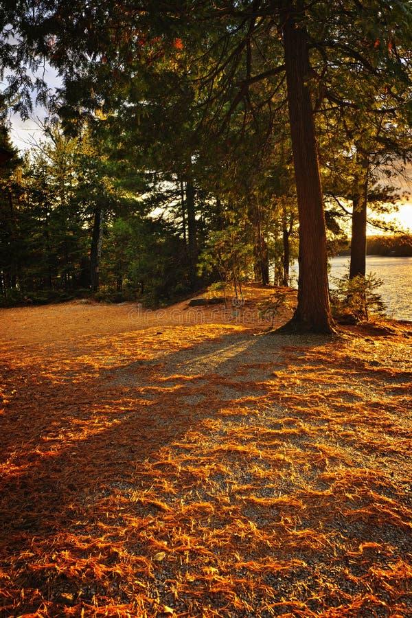 Coucher du soleil en bois au rivage de lac image libre de droits