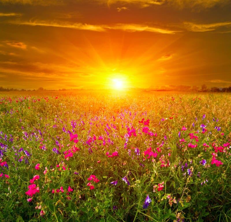 Coucher du soleil en steppe images libres de droits