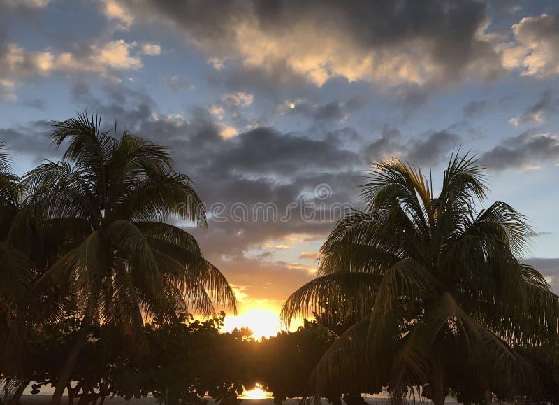 Coucher du soleil entre les palmiers photos stock