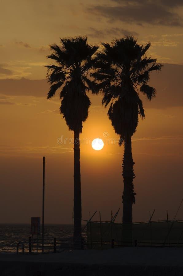 Coucher du soleil entre les paumes images libres de droits