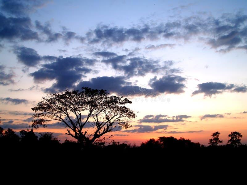 Coucher du soleil et arbre 04 photos libres de droits