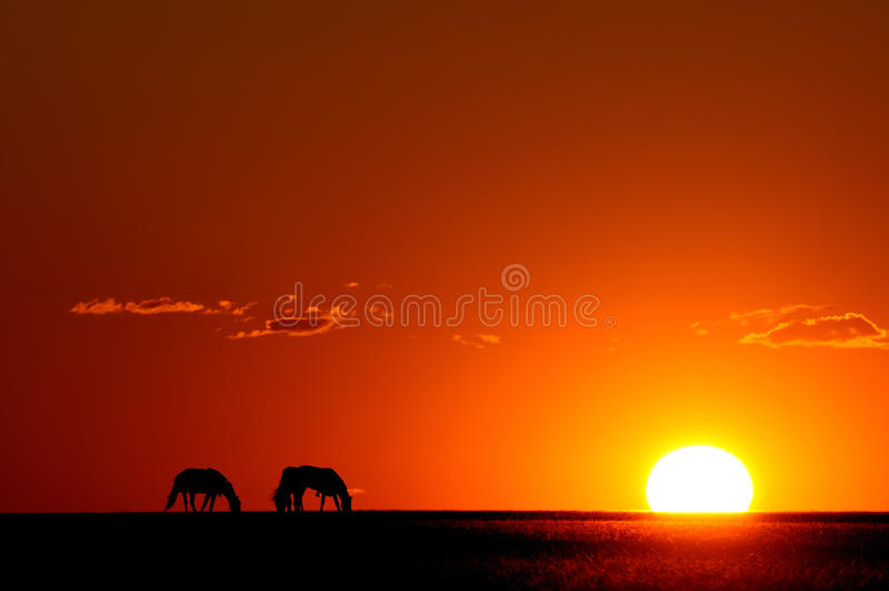Coucher du soleil et cheval image libre de droits
