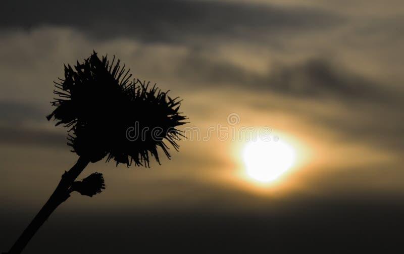 Coucher du soleil et coeur d'usine image libre de droits