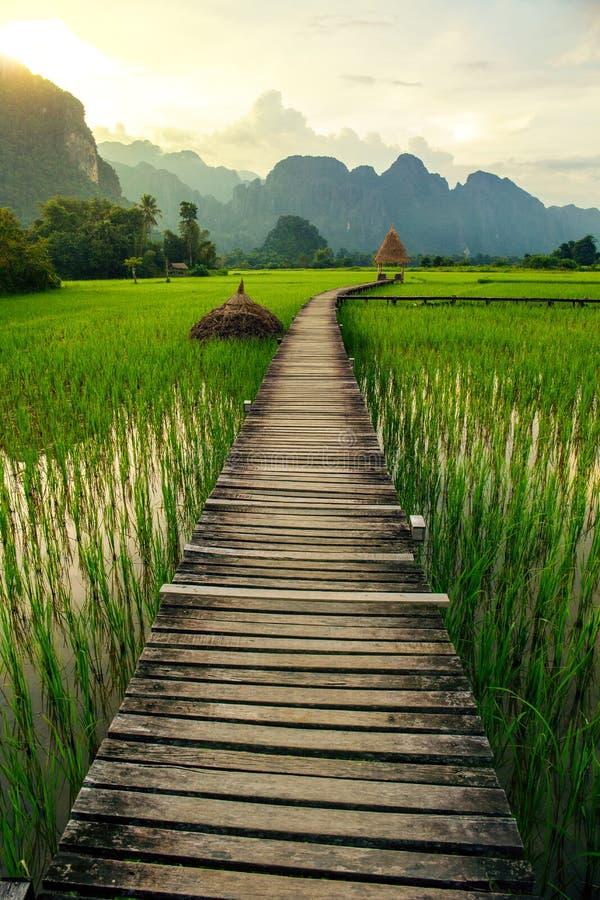 Coucher du soleil et gisements verts de riz dans Vang Vieng, Laos image libre de droits