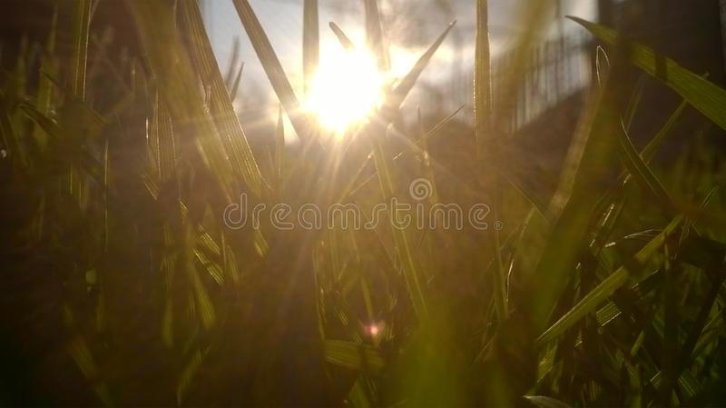 Coucher du soleil et herbe photo libre de droits