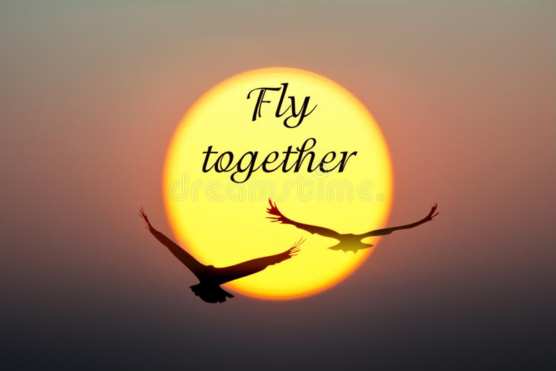 Coucher du soleil et oiseaux avec de mouche le texte ensemble photographie stock libre de droits