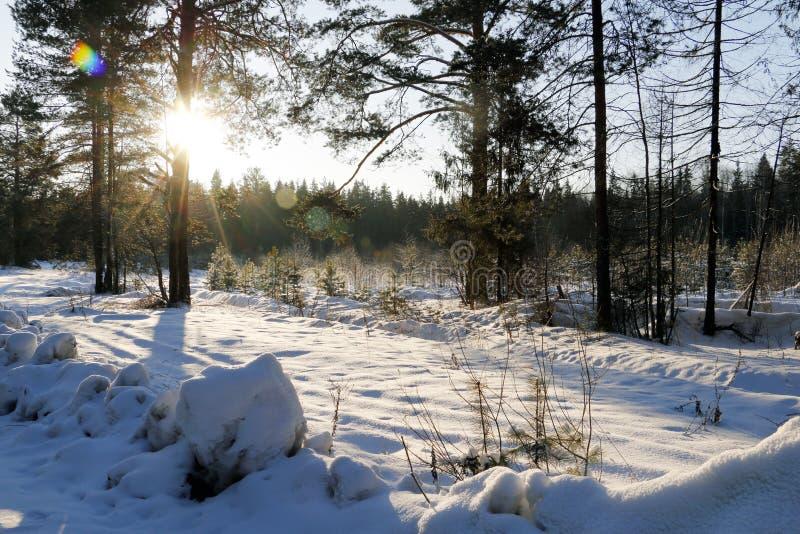 Coucher du soleil gentil dans un jour froid photographie stock