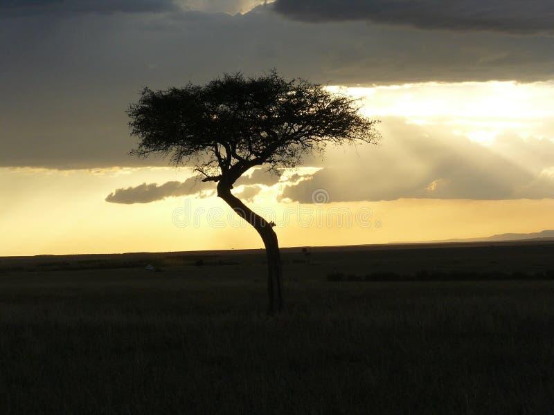 Coucher du soleil Kenia photos stock