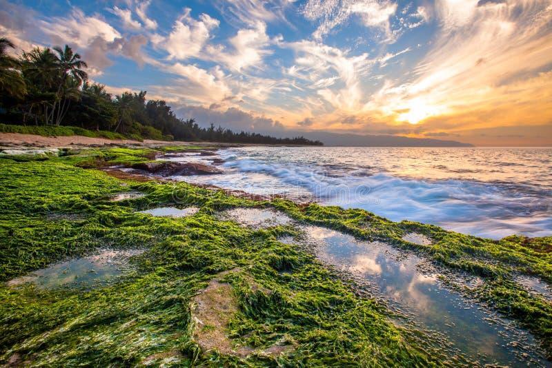 Coucher du soleil du nord d'Hawaï de rivage photographie stock libre de droits