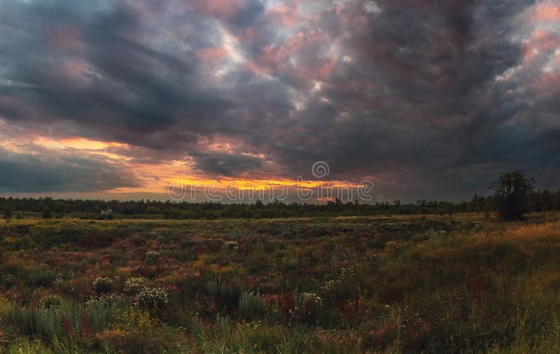 Coucher du soleil nuageux d'été Le coucher du soleil nuageux impressionnant au-dessus des fleurs de steppe se développent photos libres de droits