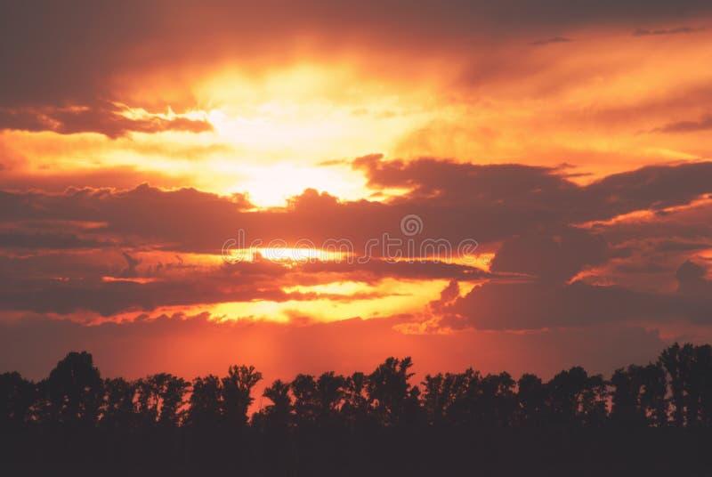 Coucher du soleil nuageux d'été scénique au-dessus des silhouettes de la forêt et des arbres Le soleil lumineux dans le ciel de s images libres de droits