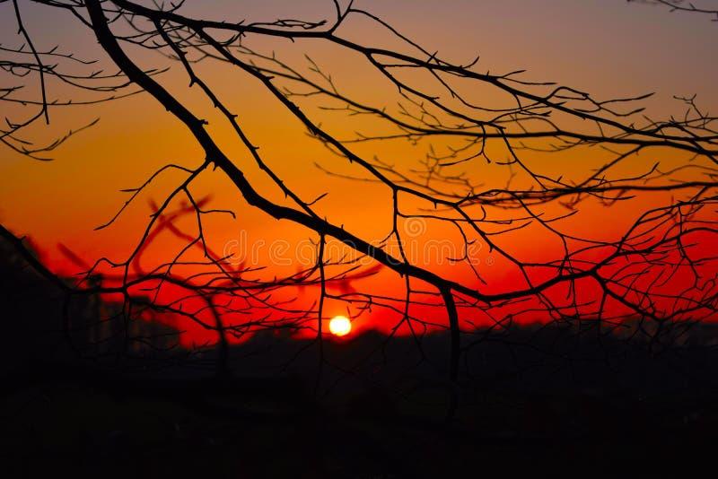 Coucher du soleil observé par les arbres photographie stock libre de droits