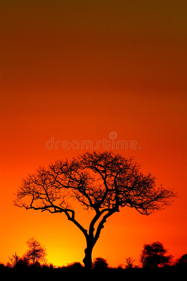 Coucher du soleil orange image stock