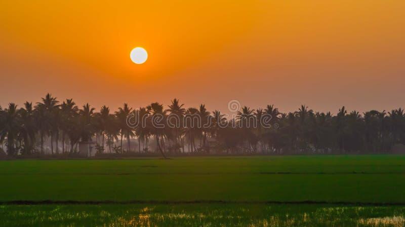 Coucher du soleil orange sur des gisements de riz image libre de droits