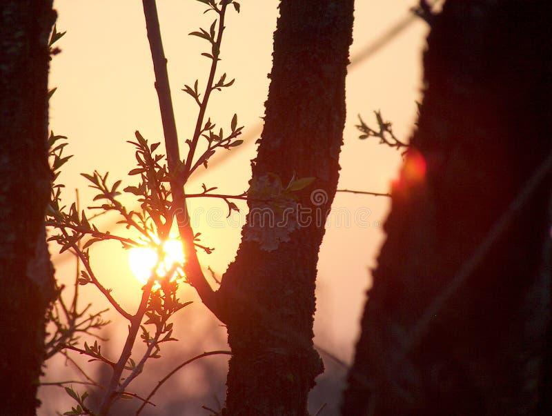 Coucher du soleil par des arbres images libres de droits