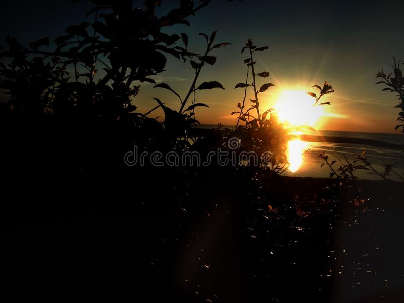 Coucher du soleil par des buissons photographie stock
