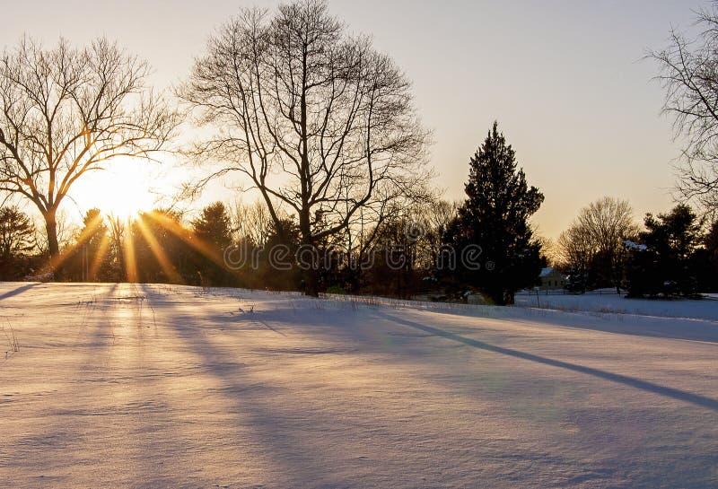 Coucher du soleil par les arbres image libre de droits