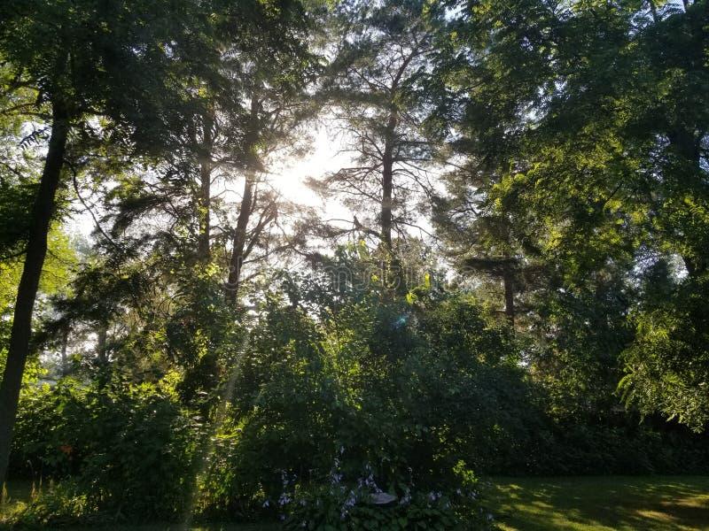 Coucher du soleil par les arbres images libres de droits