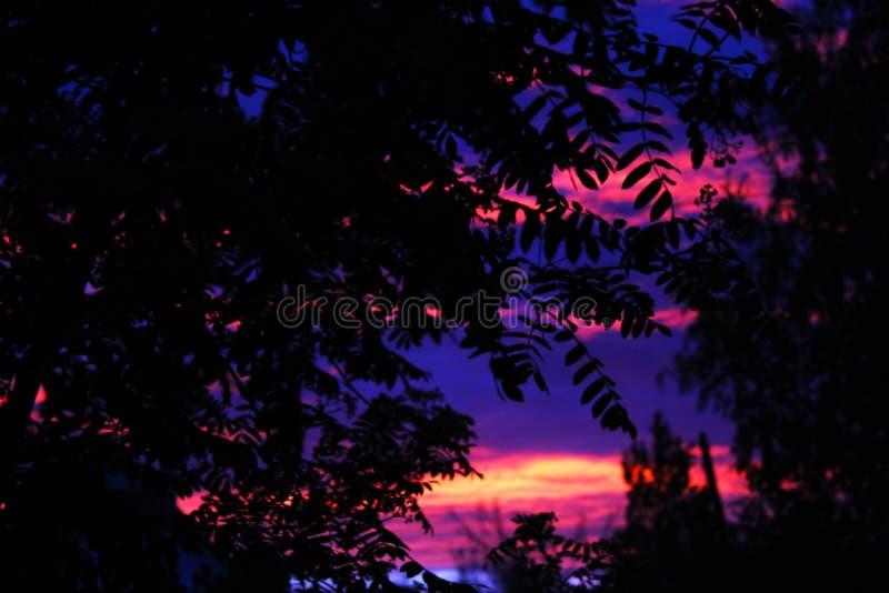 Coucher du soleil par les feuilles des arbres images libres de droits