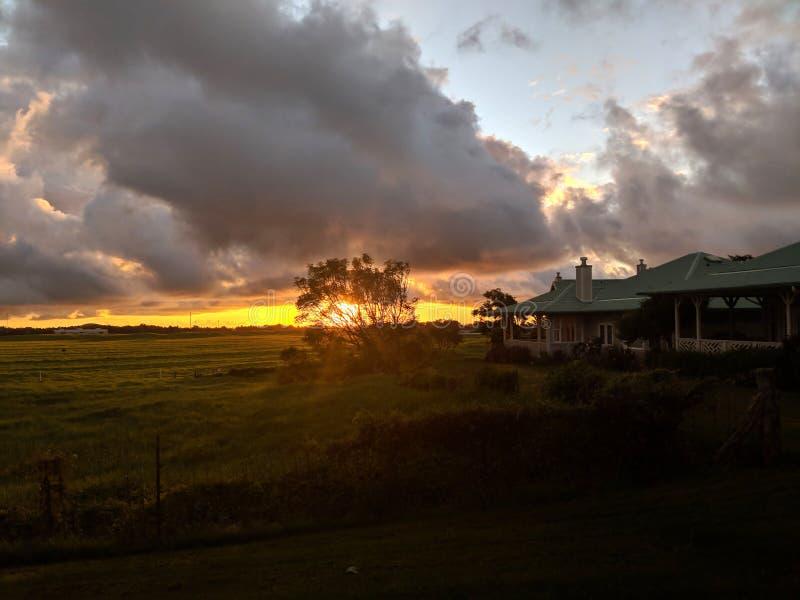 Coucher du soleil par un arbre dans Kamuela, Hawaï photographie stock libre de droits