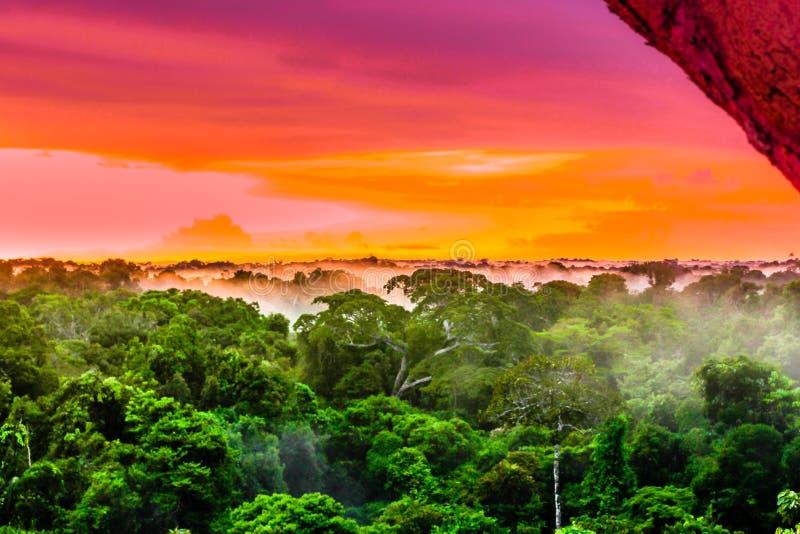 Coucher du soleil pourpre au-dessus de la forêt tropicale brésilienne dans la région d'Amazone photos libres de droits
